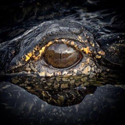 EyeoftheGator