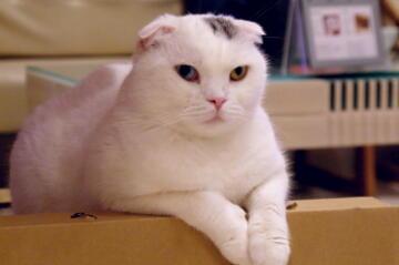 しろくまおっさん(猫?)