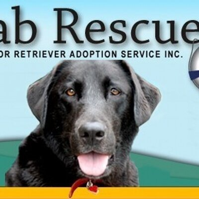 Yellow lab rescue las vegas