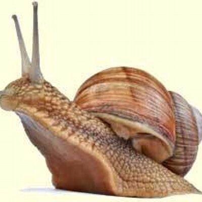 snail_rampant