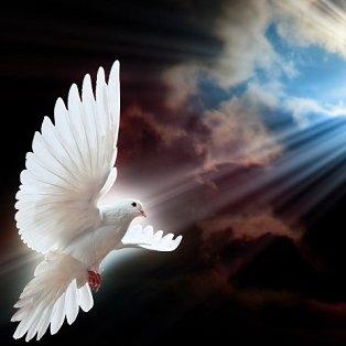Info Peacemaker