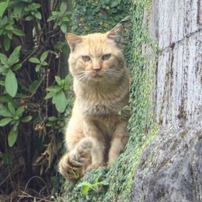 ちょっと気になる、たまに猫 @Tokyoccaatt