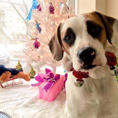 Dog Grooming Newport Ri