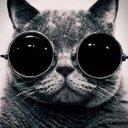 保存版猫のかわいい画像bot (@011_bot) Twitter