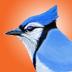 Ibird yard icon blue jay reasonably small
