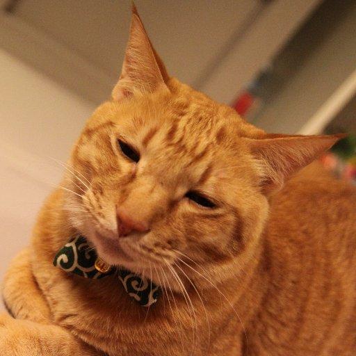 猫まるちゃんぷ@営業再開しただだよ❗️よろしくだだよ❗️