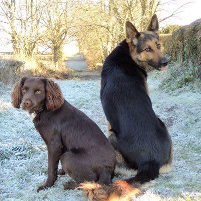 RPD Tyke PD Jim and PPD Tigger