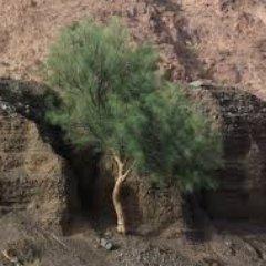 شجرة المورينجا معجزات 10