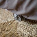 猫ちゃん大好き (@03273set) Twitter