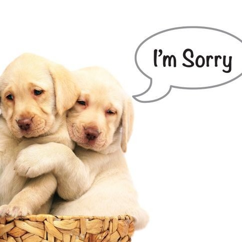 Sorry Images on Twitter: