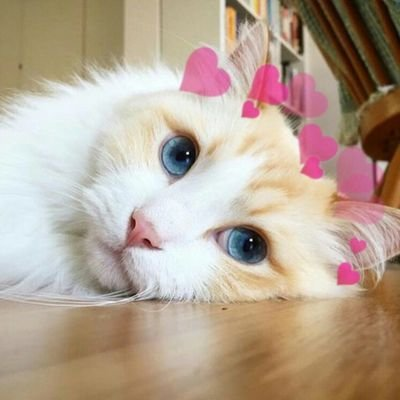 Cat Love Heart Photo