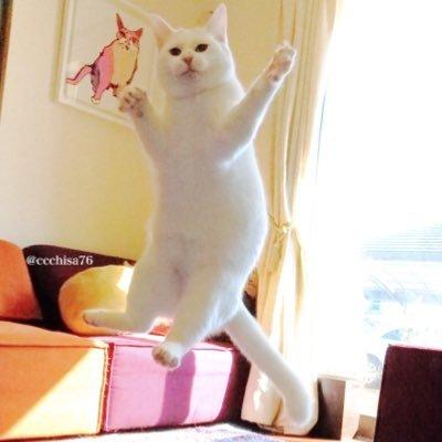無重力猫ミルコのお家@ねこ休み展