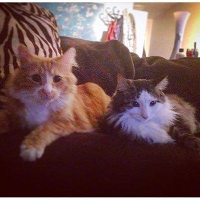 Mufasa & Lulu