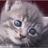 Ecole du chat Drancy