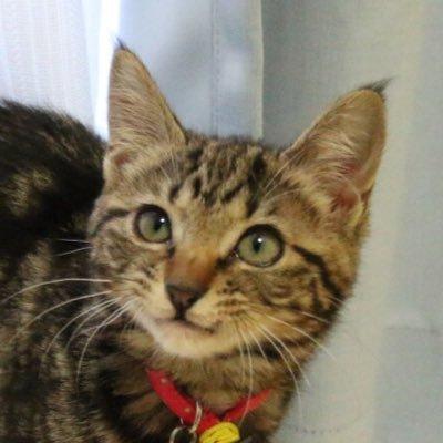 cat movie 博士の猫動画&画像