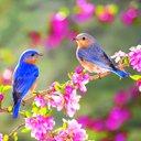 طيور مغردة