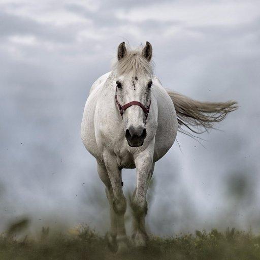 Silver Horse Coffee