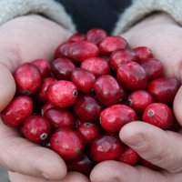 Johnston Cranberries | Social Profile