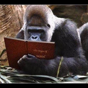 Evidence Monkey