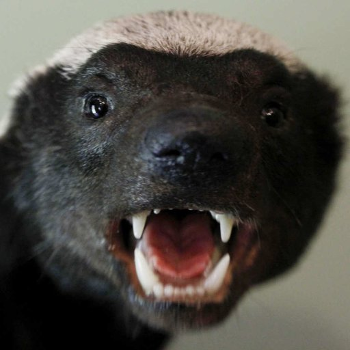 Mrs. Honey Badger