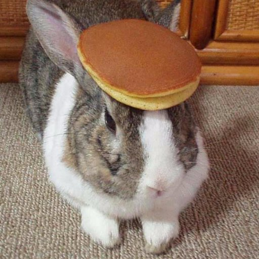 Bigly Bunny