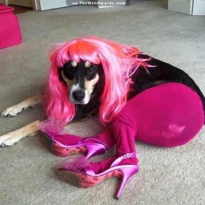 Dog Drag Queens Dogdragqueens Twitter