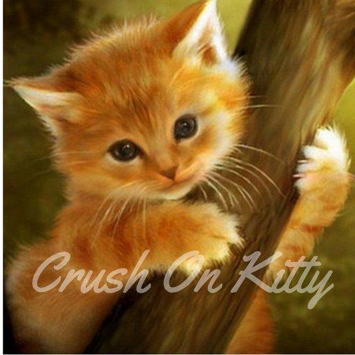 Crush On Kitty crushonkitty Twitter