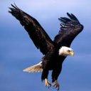 Eagle 01   (@0044Tamil) Twitter
