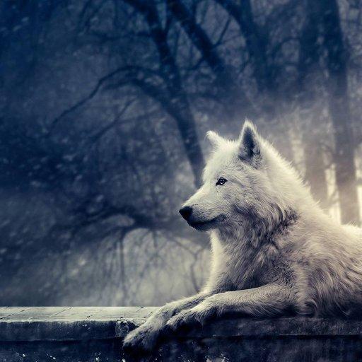 Eaglewolfe