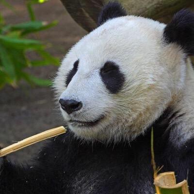 Beltway Panda
