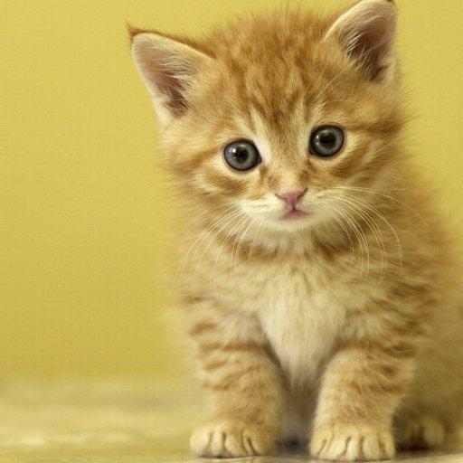 Just Cute Kitties