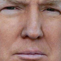 Donald Trump Sim