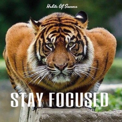 Tiger Quotes Impressive Tiger Success Quote Quotes