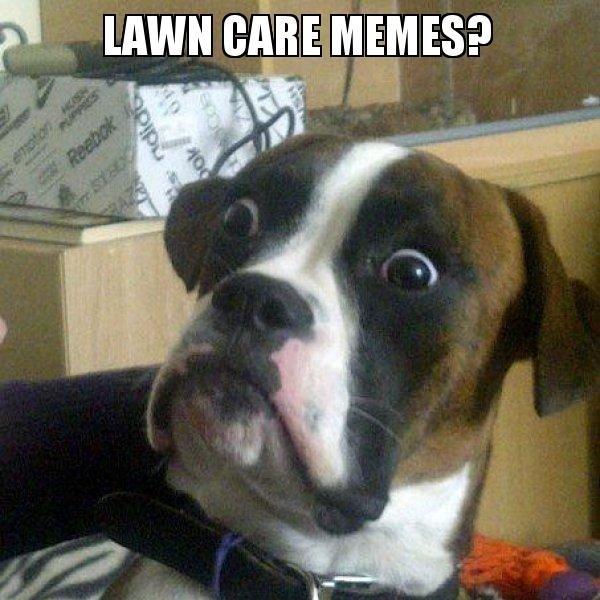 Lawn Care Memes