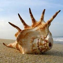 caracolita marina