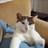 Theo Katze 🐈 🇪🇺