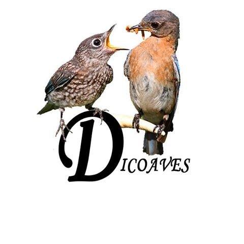 Dico Aves