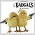 BadGals-Ausetkmt