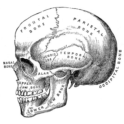 MSc Clinical Anatomy (@MScAnatomy) | Twitter