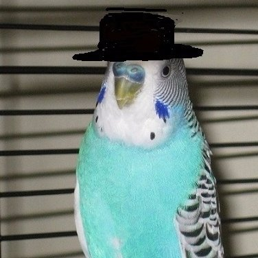 PaulieBird