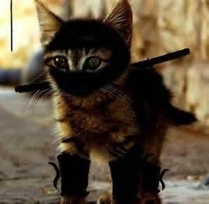 図書助&黒猫ターニャ