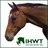 Irish Horse Welfare