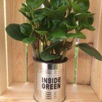 Inside Green