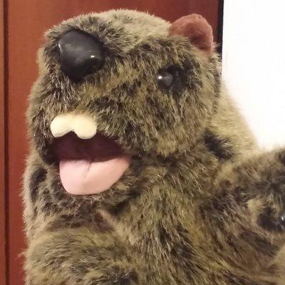 MC Marmot (@MC_Marmot) Twitter profile photo