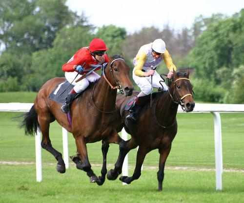 Uk betting tips twitter stock sporting betting sites