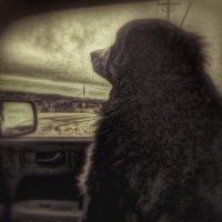 devineteri (@devineteri) Twitter profile photo