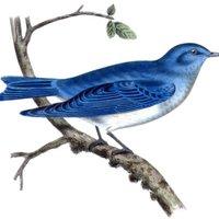 bluebird12014