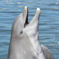 Dolphin Research Ctr | Social Profile