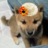 yuzuのアイコン