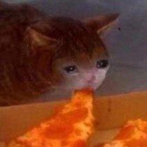 Sad Pizza Cat At Sadpizzacat Twitter